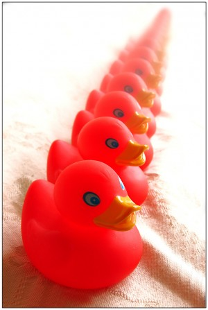 Ducks in alignment (red)